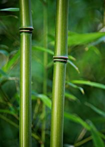 Bambusstabe-1