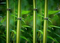 Bambusstabe-dot