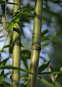 Bambusstabe2