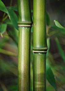 Bambusstabe3