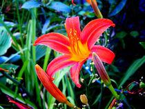 Red-flowerpower