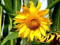 sunny flowerpower by Zarahzeta ®