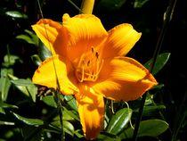 Yellow-flowerpower