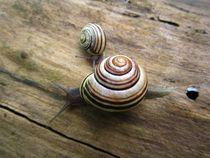 Snails by Sabine Cox