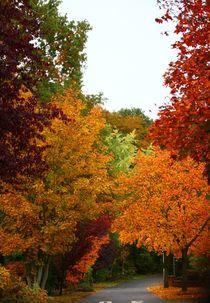 Bunte Blätter fallen... von Simone Marsig