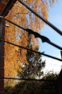 ...langsam kommt der Herbst...  von Simone Marsig