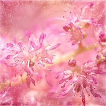 Rosa Blüten by Gabi Siebenhühner