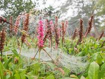 Spinnerei im Herbst by Nicole Bäcker