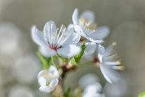 Spring freshness von Uladzislau Mihdalionak