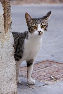 Tabby cat peeking from behind an old wall von Jessy Libik