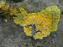 Mooslandschaft von Antje Püpke