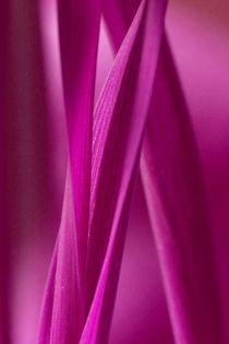 Pinkes-gras