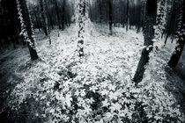 wild wine web by Dorit Fuhg