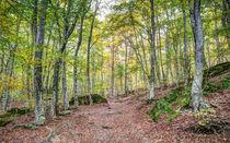 Autumn in the Enchanted Rocks (Catalonia) von Marc Garrido Clotet