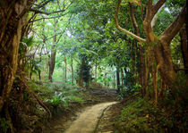 Forest path at Naha, Okinawa by Erik Mugira