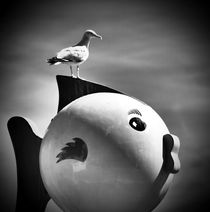 seagull by HPR Photography