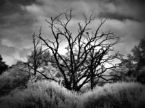 old tree by HPR Photography
