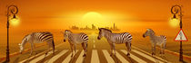 Use the zebra crossing by Monika Juengling