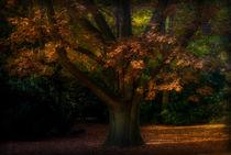 Herbstbaum - Herbsttraum by Wolfgang Gürth