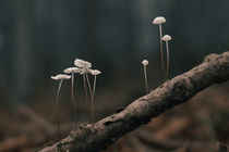 small mushrooms von tr-design