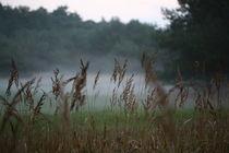 Im Nebel verborgen von Simone Marsig