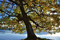 Herbsttag von Peter Bergmann