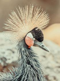 Black Crowned Crane (Balearica Pavonina) Bird by Radu Bercan