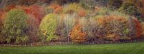 Autumn trees von Leighton Collins