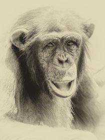 African Chimpanzee Portrait von Radu Bercan