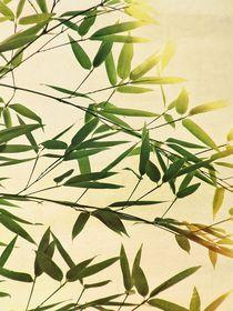 bamboo lightning von augenwerk
