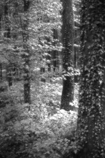 black forest von augenwerk