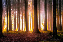 'Goldener Wald' by Nicc Koch