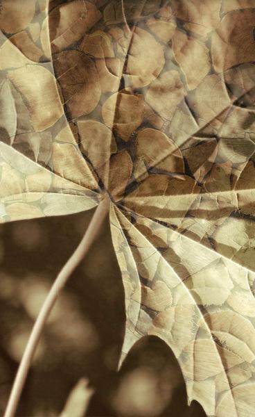Stapelblatt