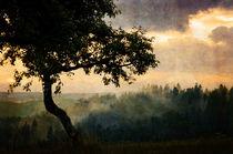 dämmerung  -  twilight by augenwerk
