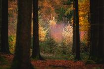 german forest 2014 by lilithdavinci
