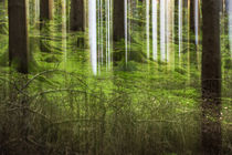 Forest Flash von dagino