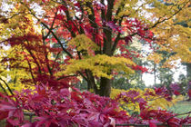 Acer Colours  by Rob Hawkins