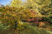 Autumn-sunshine
