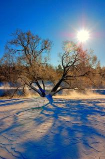 Zimnieie-solntsie-2