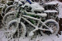 Vom Winter überrascht von Martina Lender-Frase