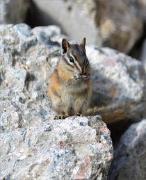 Squirrel von Daniella Paudash