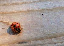 Lady Bug II von Daniella Paudash