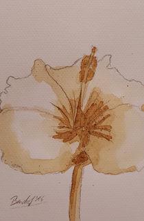 Coffee Flowers IV von art-gallery-bendorf