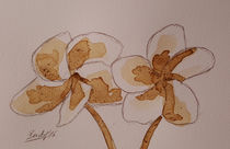 Coffee Flowers X von art-gallery-bendorf