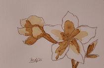Coffee Flowers XVI von art-gallery-bendorf