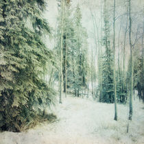 Wintry Woods by Priska  Wettstein