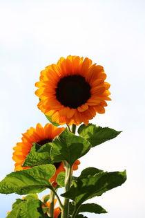 Herbstlicher Sonnengruß der 2.  von Simone Marsig