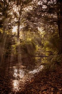 Autumn Haze by Colin Metcalf