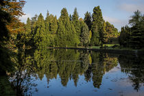 Lake Reflections by Colin Metcalf