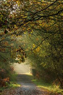 Late Autumn Sunbeams by David Tinsley